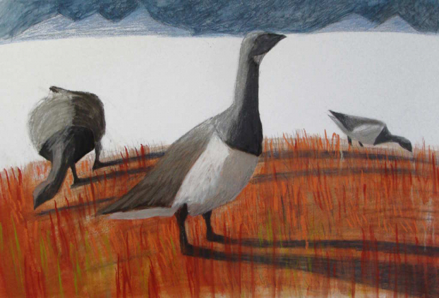 brent geese in arctic autumn sniff the wind and think of migration