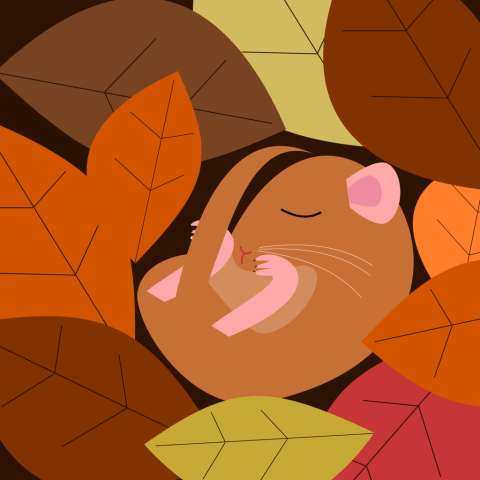 a doormouse slleeping soundly amongst autumn leaves. Simply drawn with flat bold colours on a white background