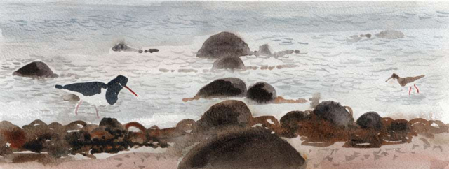 drawing of an oystercatcher and a redshank in shallow water with rocks and seaweed in the foreground