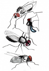 drawing of 4 black insects with red eyes in pencil and watercolour