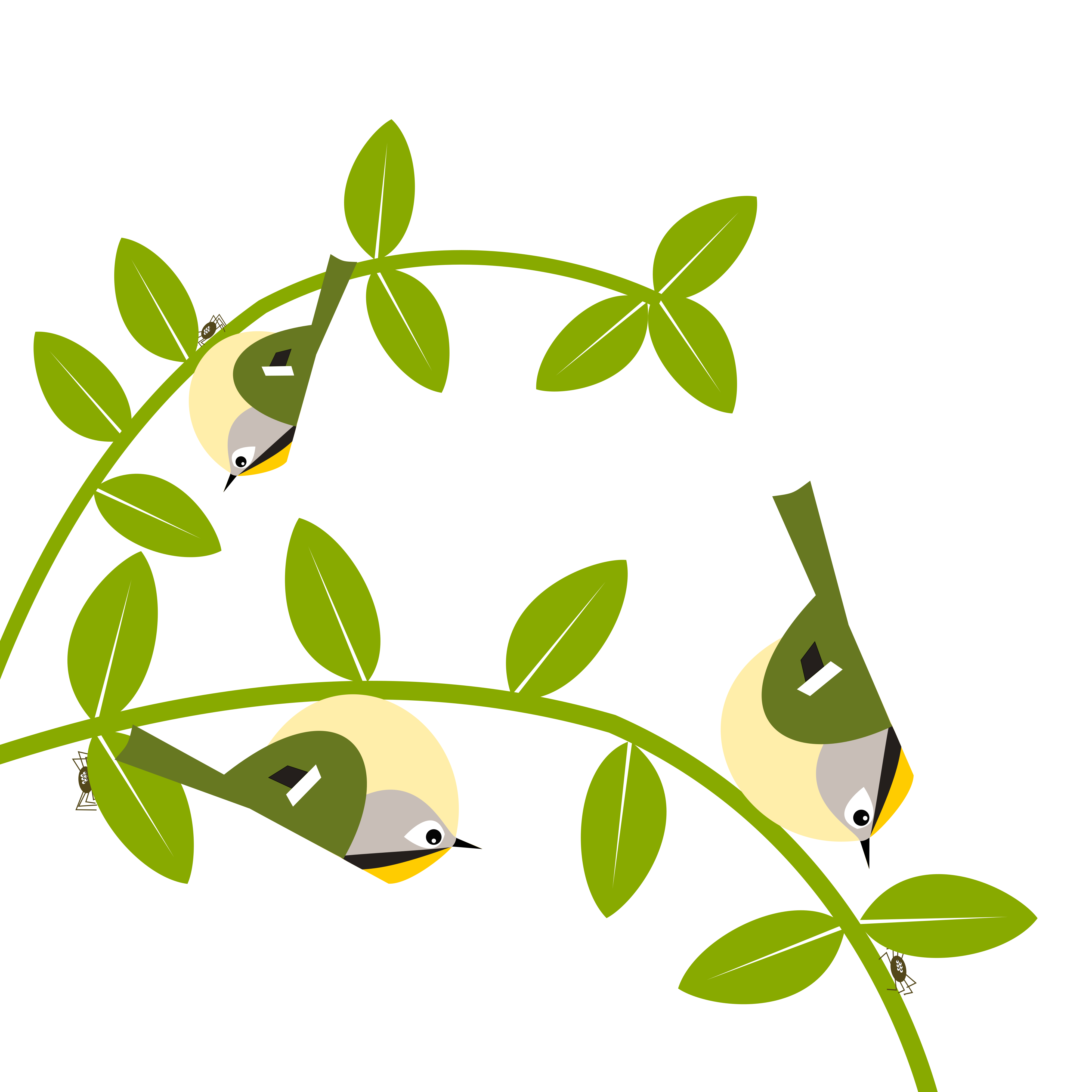 three goldcrests hunting for tiny spiders hiding behind leaves in a tree. Simply drawn with flat bold colours on a white background