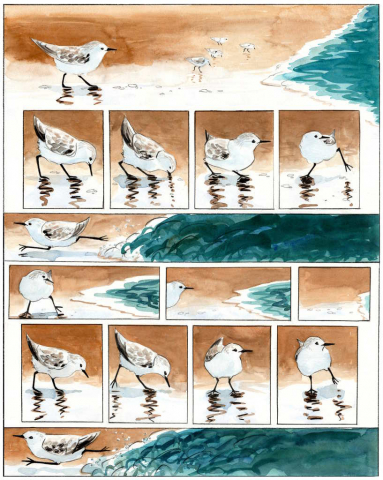 a one page colour cartoon depicting sanderlings rushing in and out with the waves