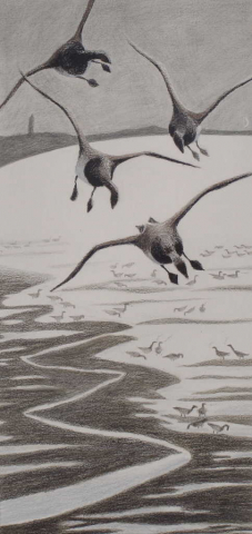 4 brent geese tip to empty air from their wings as they descend to join the flock feeding below at low tide