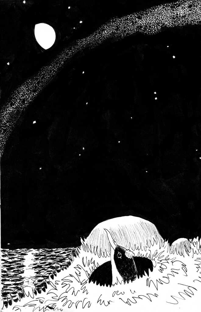 a cartoon drawing of a young shearwater emerging form a burrow at night with the moon and milky way above