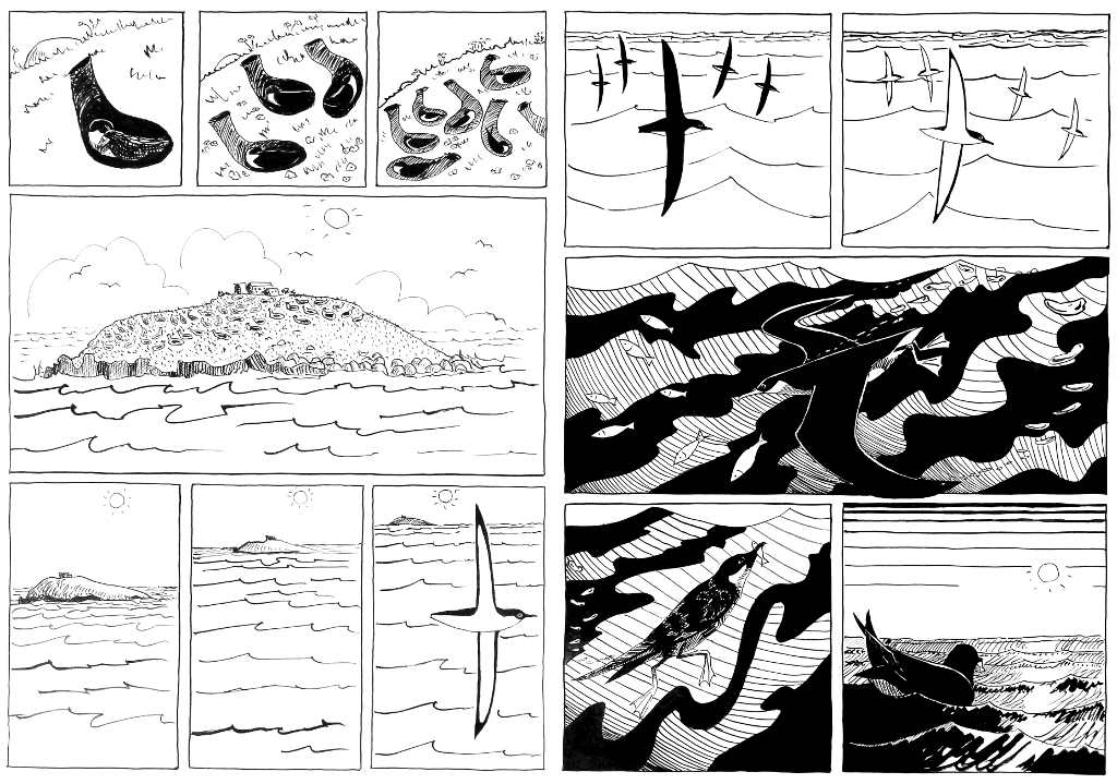 2 pages from a black and white cartoon of shearwaters nesting in a burrow, the view pulls back until the island is distant and we see shearwaters fishing on the open sea