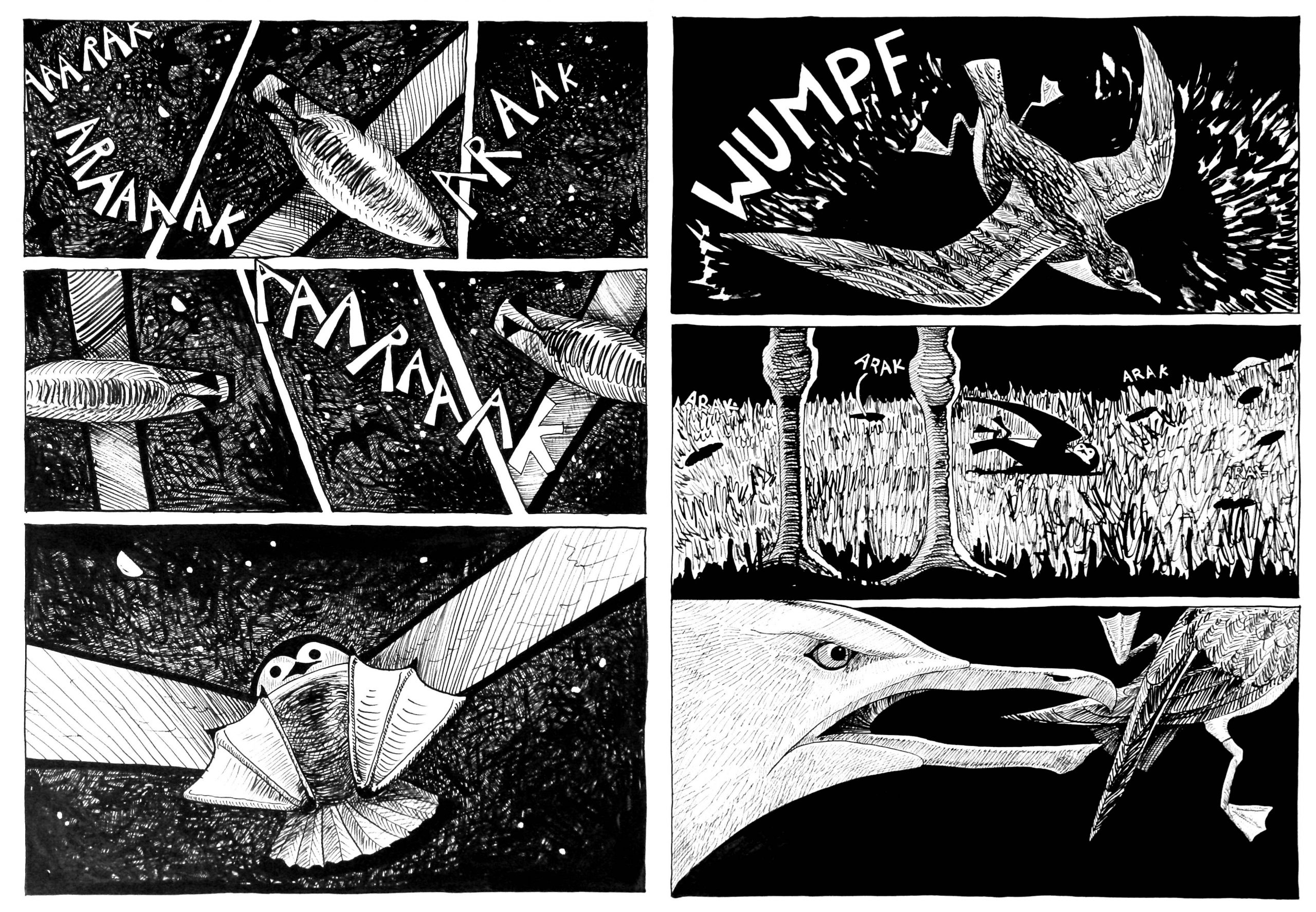 2 pages from a black and white cartoon, a confusion of shearwaters in the sky at night, then one lands to find it is near a gull and has to make its escape