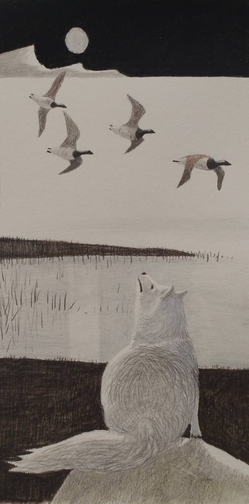 an arctic fox watches as geese fly south