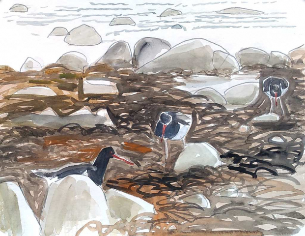 drawing of three oystercatchers feeding in seaweed in watercolour and pencil, with rocks and water in background