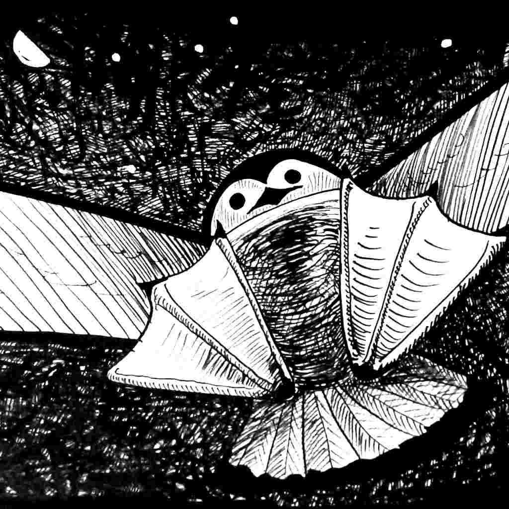Cartoon drawing in ink of a shearwater about to land on your head