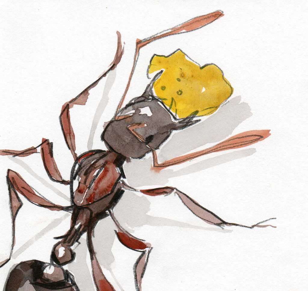 watercolour of an ant with a cake crumb in its jaws