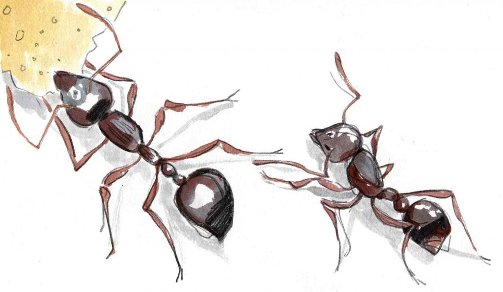 watercolour drawing of two ants, one with a large cake crumb